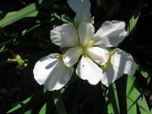 FourFold White